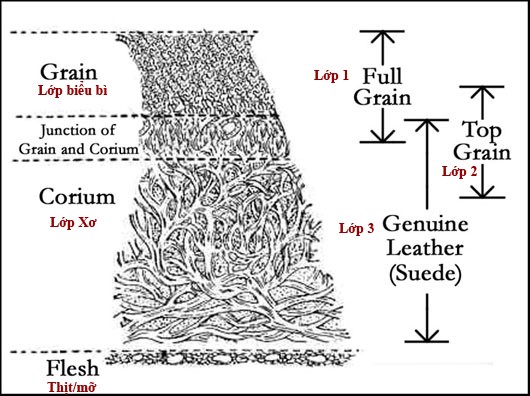 tìm hiểu các loại da thuộc, Tìm hiểu các loại da thuộc sử dụng nhiều nhất hiện nay